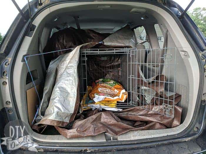 Dog crate in back of minivan for transporting the chickens.