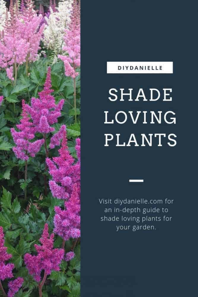 Get a list of fantastic shade loving plants for your garden.
