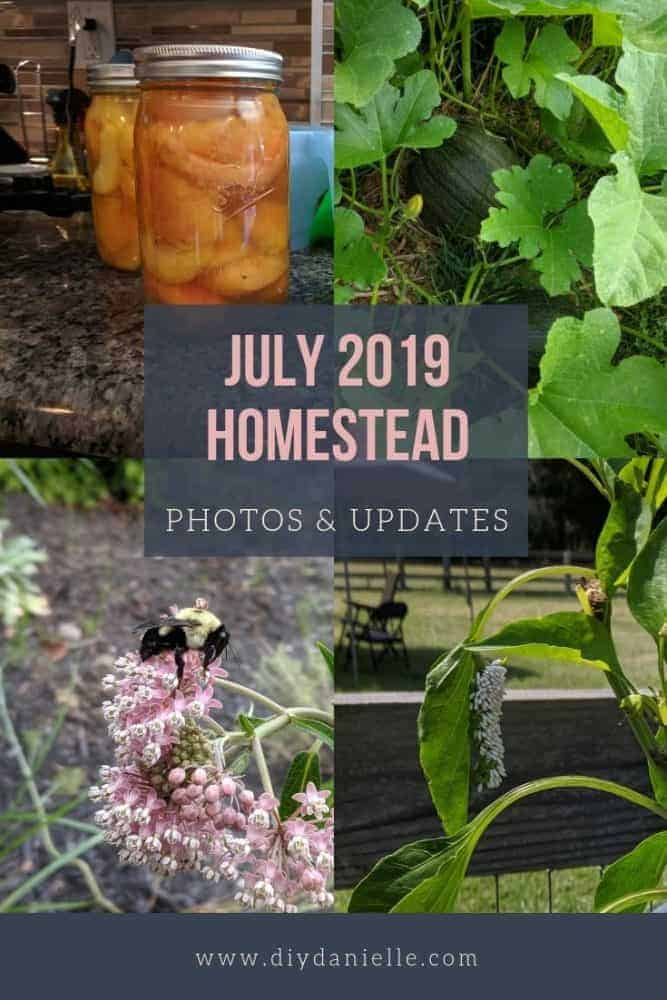 Photos from the month of July 2019 on the Suburban Homestead and experiences this month, including poison ivy.