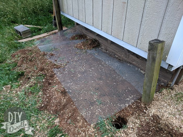 Laying wire for the guinea pig run. Dirt needs to be laid over it.