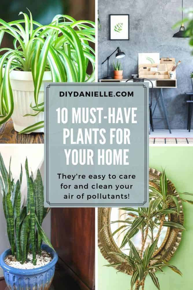 10 Must have plants that will improve the air quality in your home!