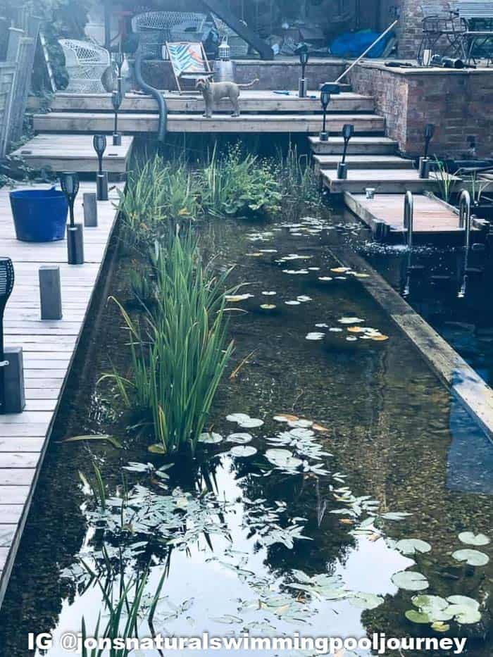 The shallow section of the swimming pond has an area for plants that help filter the water.