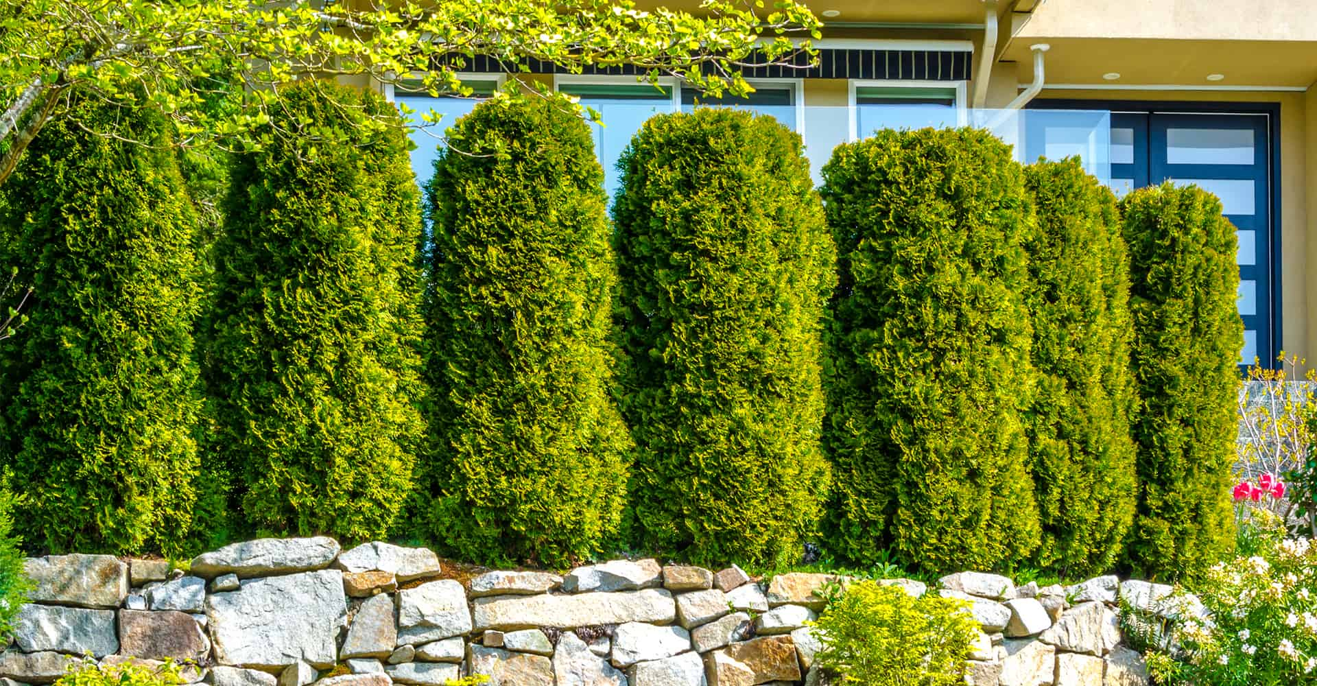 7 Fast Growing Trees For Ultimate Privacy In Your Garden
