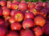 Apples_Together