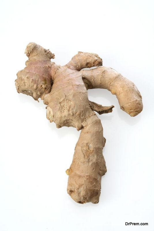 ginger-the-root-2