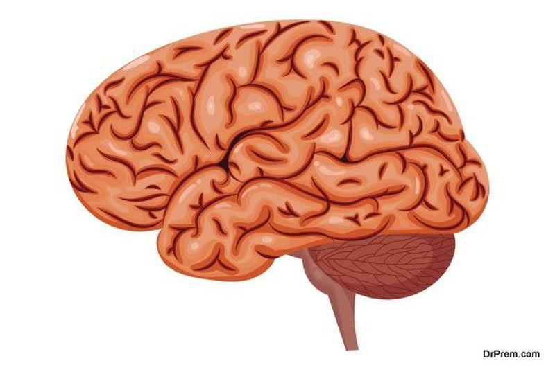 brain responds
