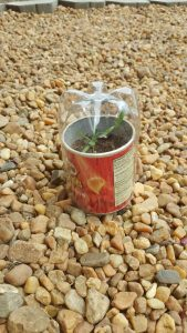 Upcycle half of a 1-liter water bottle into a terrarium or to protect plants from frost or hail.