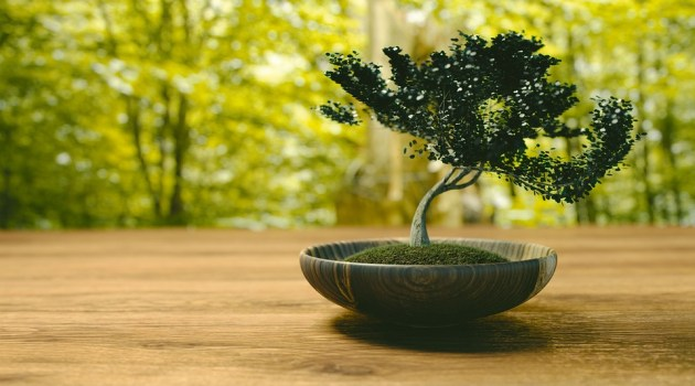 how to grow bonsai