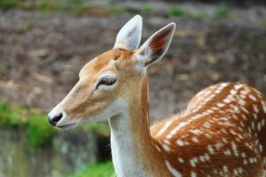 adorable animal animal photography animal portrait deer-resistant