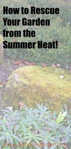 summer garden heat