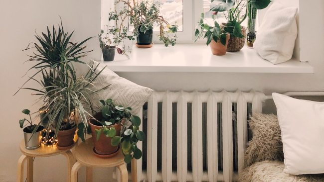 Love Plants? A Guide to Decorating with Nature | DIY Home ...
