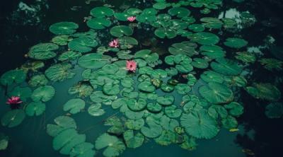 pond health