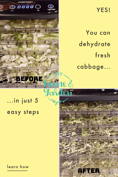 dehydrate cabbage pin