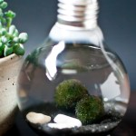 DIY Lightbulb Aquarium Tutorial