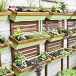 Starting My DIY Vertical Garden
