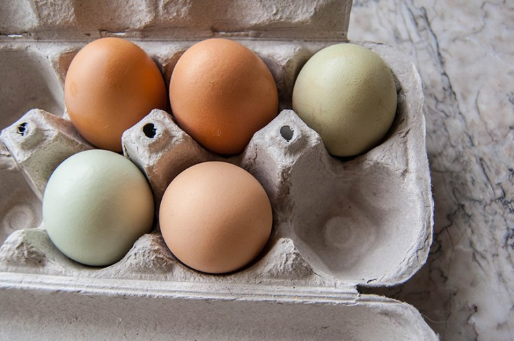eggs of different colors