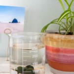 Make a Marimo Moss Ball Aquarium