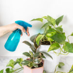 Spring Cleaning for Your Plants
