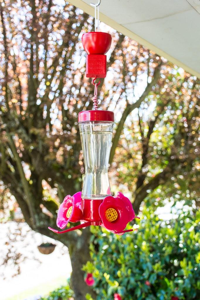 Are ants eating your hummingbird food? Make this easy DIY hummingbird feeder ant moat to keep ants away! #DIY #birds #hummingbirds