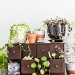 These DIY mini plant drawers are a pretty, vintage-inspired way to display your plants.