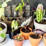 Guide to Easy Plant Propagation