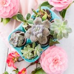This cute Easter egg planter centerpiece does double-duty as table decor and a spot to propagate succulents. #Easter #plants #planter #houseplants #succulents