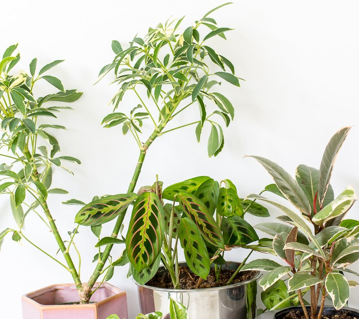 5 Ways To Tell If Your Plants Need Water