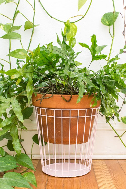 This super quick plant stand hack helps you give your plants a little extra height. #plant #plants #houseplants #DIY