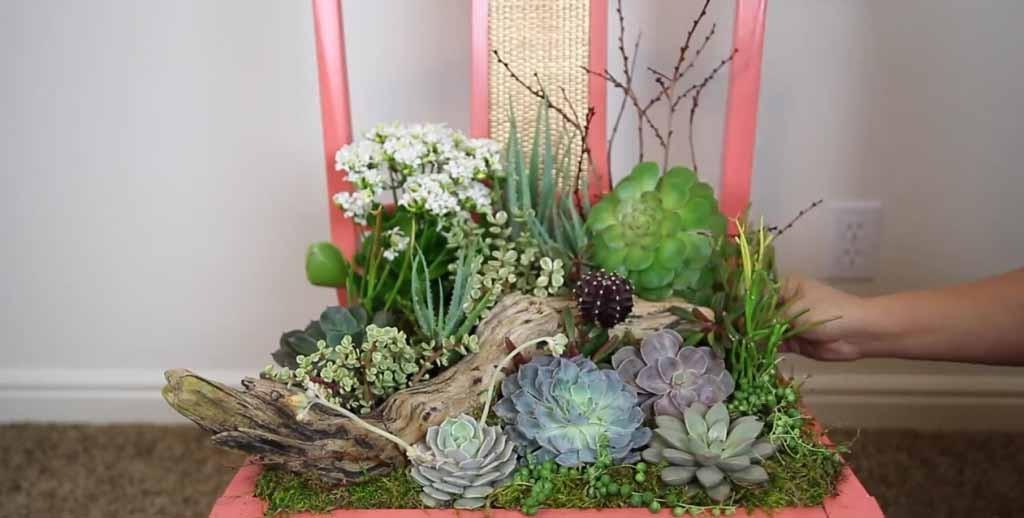 Kitchen Decor Plants
