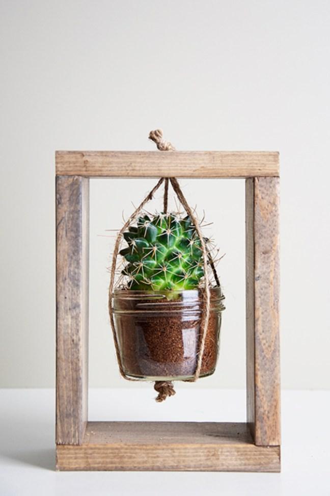 small indoor plants, best indoor plants, cactus planter