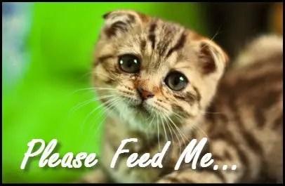 DIY_Preparednes_Why_No_Food_Storage_10_Feed_Me