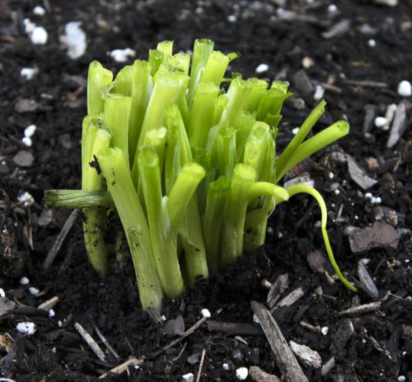 Vegetable Gardening Hacks