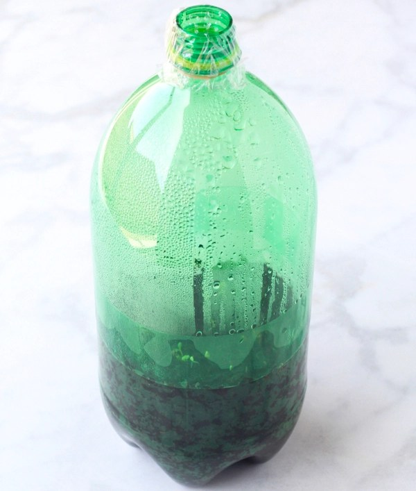 Soda Bottle Greenhouse