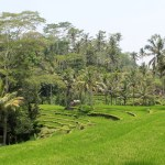 Temples & Terraces: An Ubud Daytrip on Motorbike