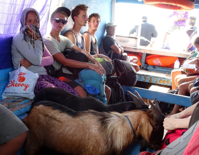 Gili Air Goat on a Boat