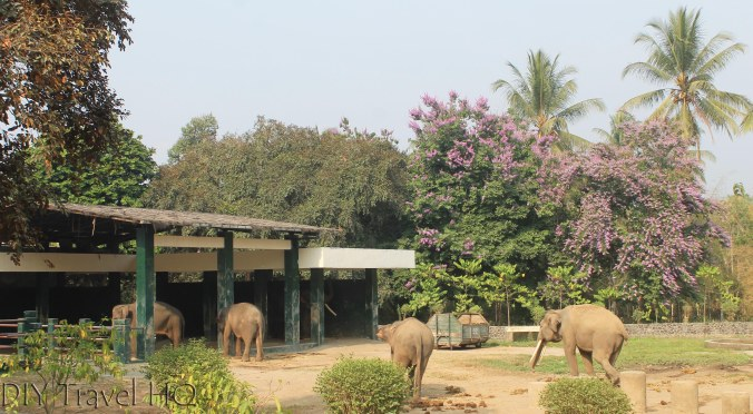 Zoo at Borobudur