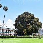 Arbol del Tule, the World's Largest Tree