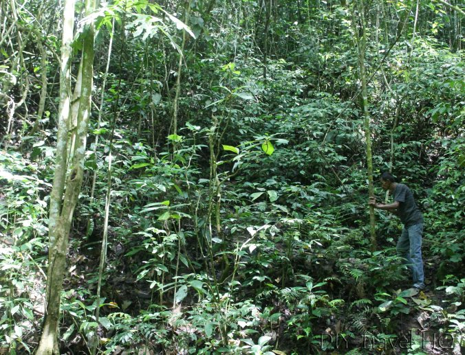 Searching for rafflesia with guide