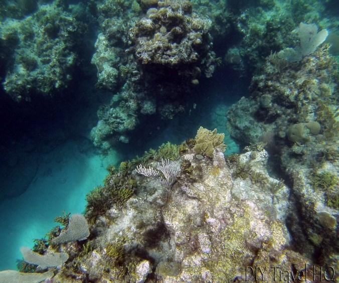 Playa Coral Crevice and Coral Formations