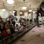 Every Free Museum in New York City!
