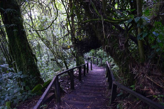 Laguna Chicabal Countless Stairs to Crater Lake