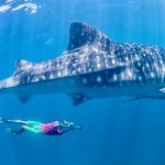 How to Find a Cheap Swimming with Whale Sharks Tour on Isla Mujeres