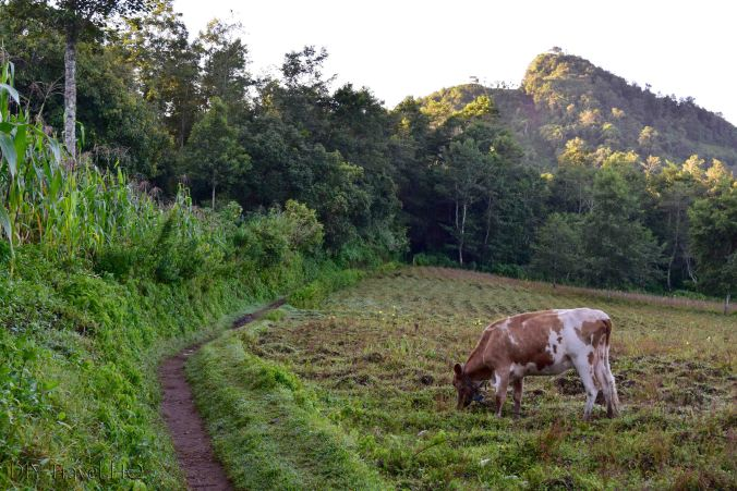 Trail to Indian Nose from Santa Clara La Laguna
