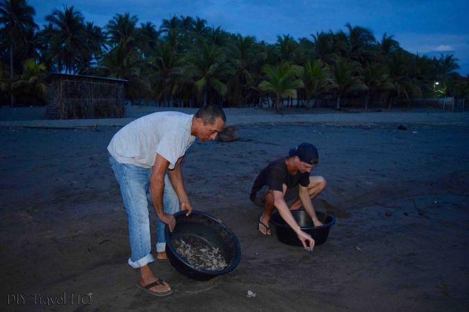 Releasing sea turtles in El Salvador