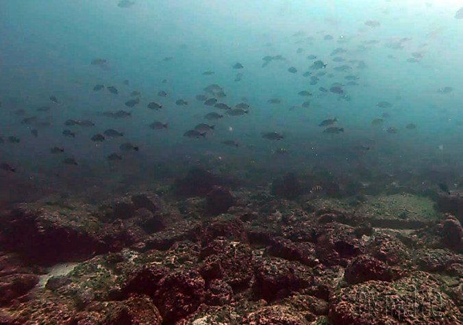 Virador Dive Site Swimming with the Fish
