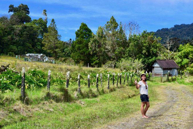 Sendero Los Quetzales Pasture Lined Dirt Road