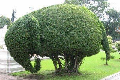 Elefante Topiary.