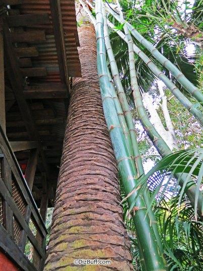 Dominguez Palm Tree at Disneyland CA close up next to Jungle Cruise
