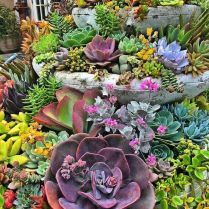 45+ Know What Gurus Think About Assorted Succulents 228