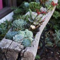 45+ Know What Gurus Think About Assorted Succulents 309